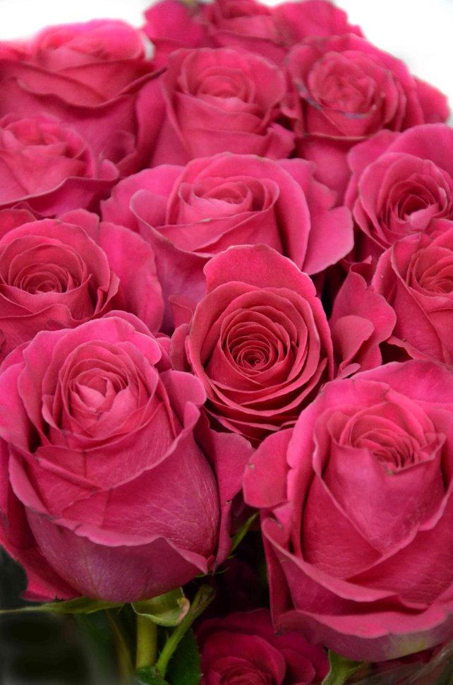 Розы пинк флойд фото